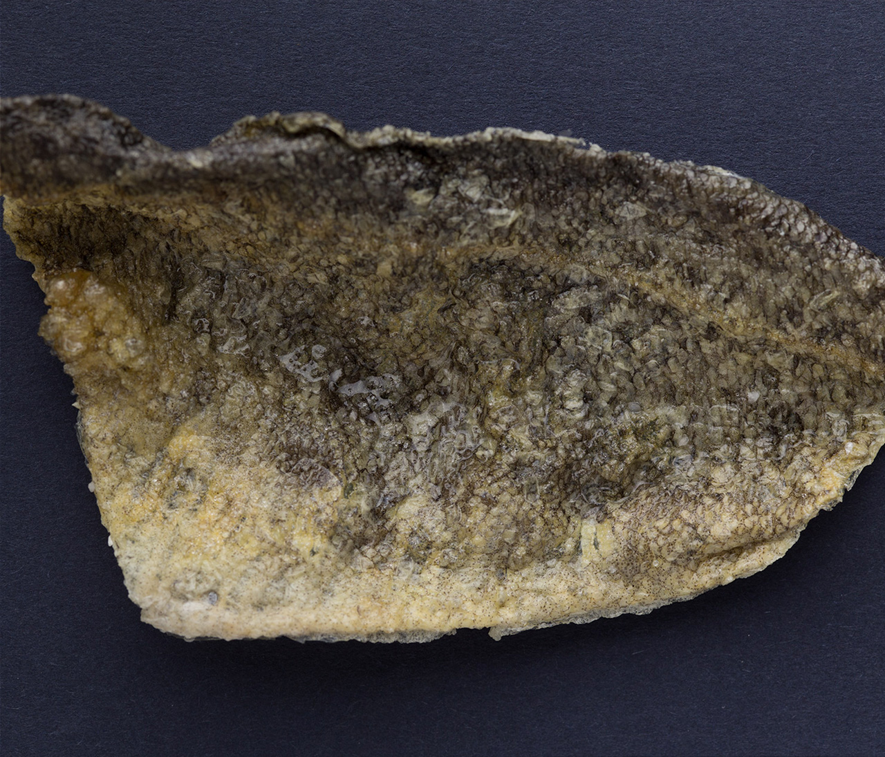 Fishskin Taco